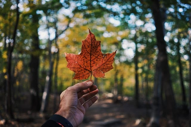a person holding a leaf as a symbol of Canada